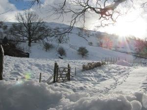 Snowy Sheep Ambleside