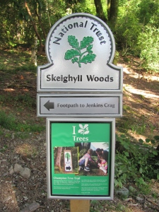 Skelghyll Woods