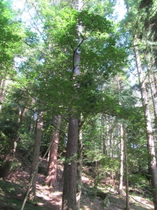 Champion Tree Trail