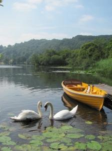 Grasmere swans